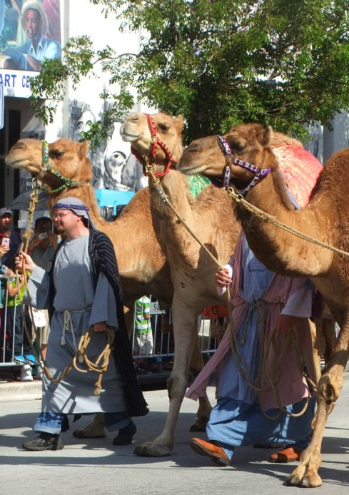 THREE KINGS CAMELS